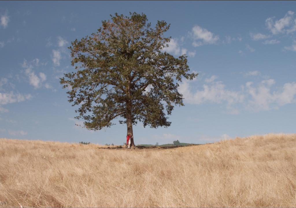 drvo lola