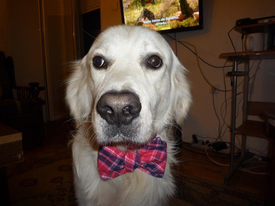 foto: Ah! Dogs arhiva