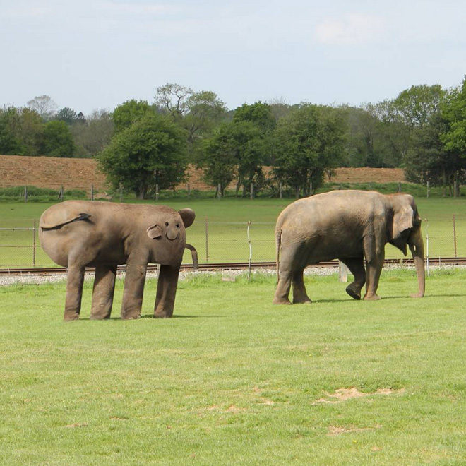 slon1