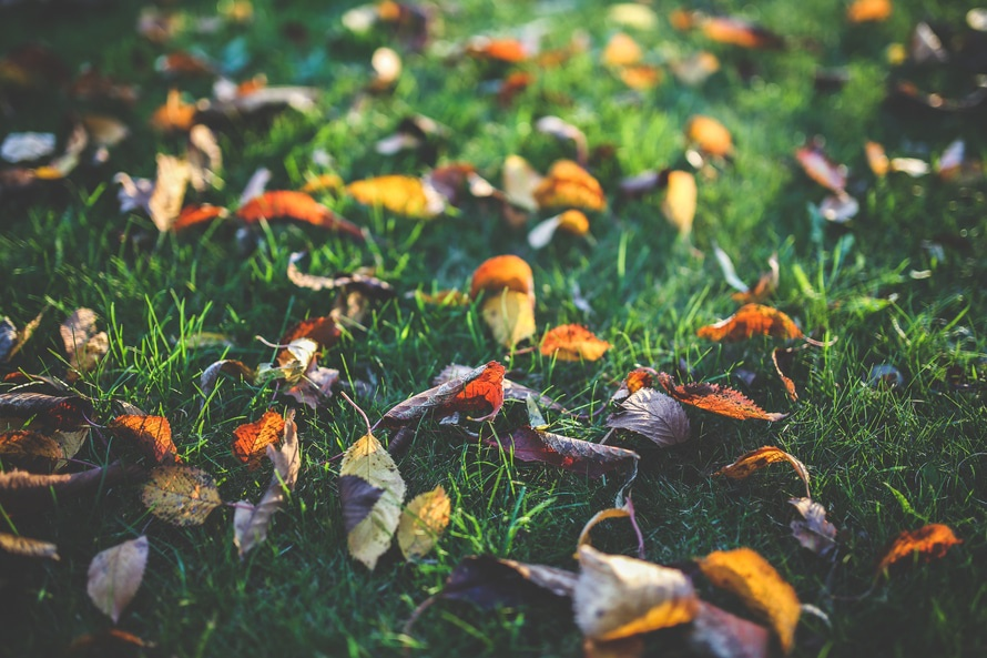 jesenje-lisce-2